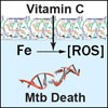 Peculiar and Unique to TB above other microbes, Vitamin C -Through a Fenton reaction - Kills Tuberculosis (Mtb) by Causing Iron (Fe) to Create Reactive Oxygen Species (ROS) - Which Destroy Even Drug Resistant Strains of TB.